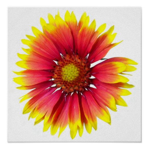 Red Yellow Flower Posters