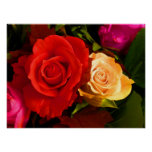 Red Yellow Rose Poster Posters