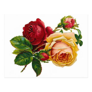 Red & Yellow Roses Postcard