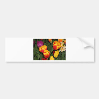 Red & yellow Tulip flowers in bloom 6 Bumper Sticker
