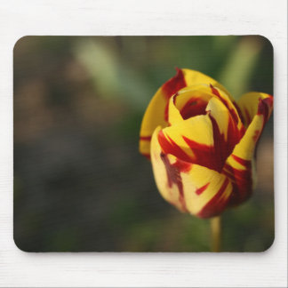 Red Yellow Tulip Full Bloom Mouse Pad