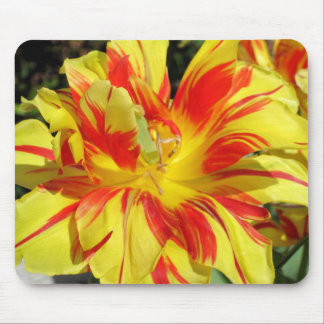 Red-Yellow Tulip Mouse Pad