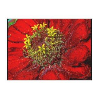 Red Zinnia canvas wrappedcanvas