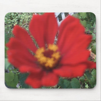 Red Zinnia Close Up Mouse Pad