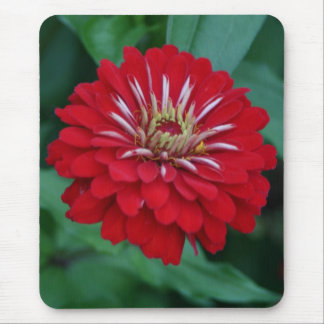 Red Zinnia Flower blossom Mouse Pad