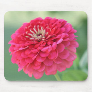 Red Zinnia Mouse Pad