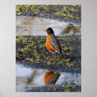 redbellybird print