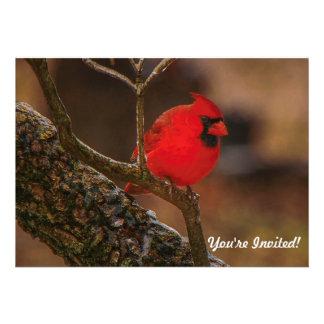 Redbird On A Branch - Invitation