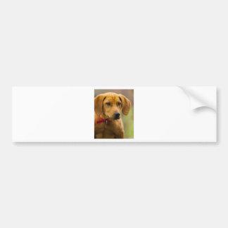 Redbone Coon Hound Dog Puppy Car Bumper Sticker