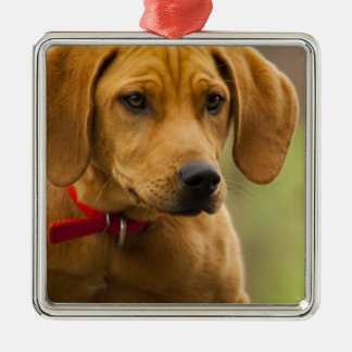 Redbone Coon Hound Dog Puppy Square Metal Christmas Ornament