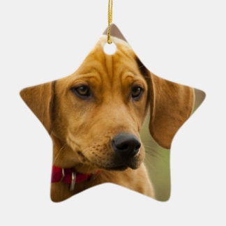 Redbone Coon Hound Dog Puppy Double-Sided Star Ceramic Christmas Ornament