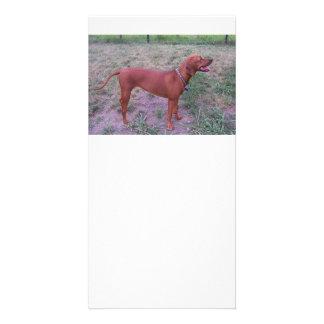 Redbone_Coonhound full.png Card