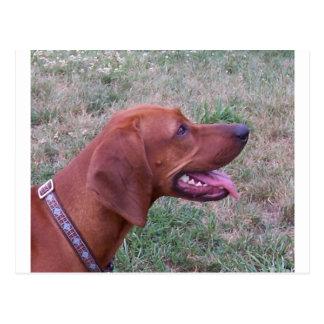 Redbone_Coonhound.png Postales