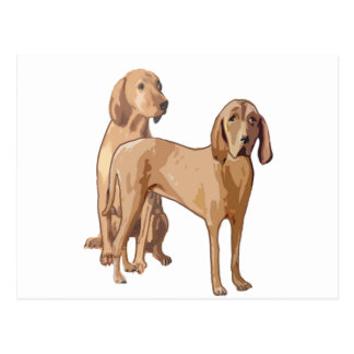 redbone coonhound postcard