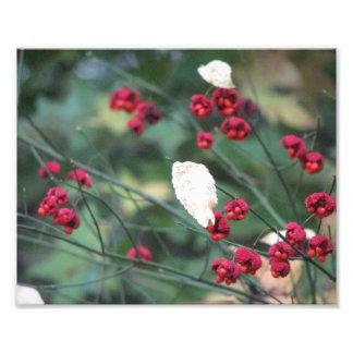 Redbubs Photo Print