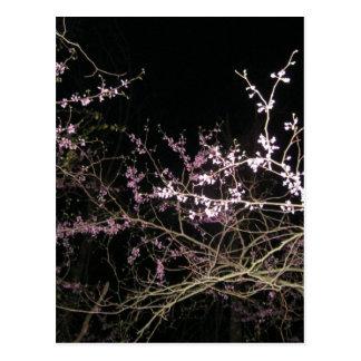 redbud de la primavera en la noche postal