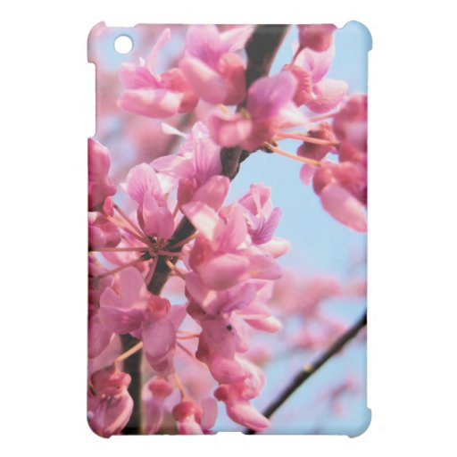 Redbud florece caso del iPad
