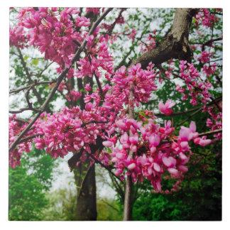 Redbud florece teja