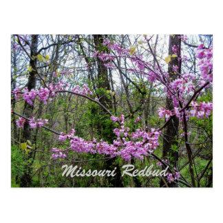 Redbud Missouri  Postcard