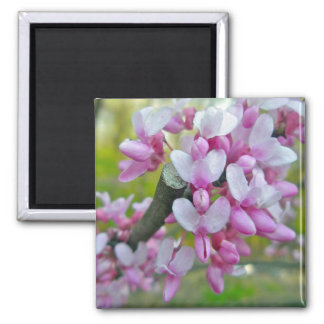 Redbud Tree Blossoms Items 2 Inch Square Magnet