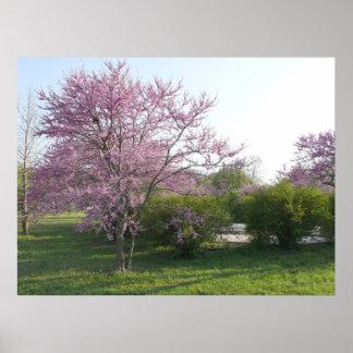 Redbud Tree - El Dorado Lake Kansas Print