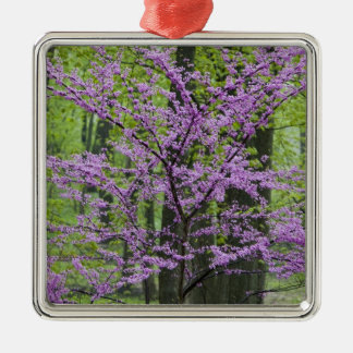 Redbud trees in full spring bloom near Defiance Metal Ornament