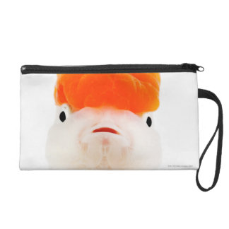 Redcap lionhead goldfish (Carassius auratus) Wristlets