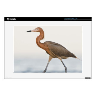 """Reddish Egret adult hunting in bay, Texas 15"""" Laptop Decal"""