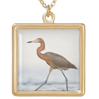 Reddish Egret adult hunting in bay, Texas Gold Plated Necklace