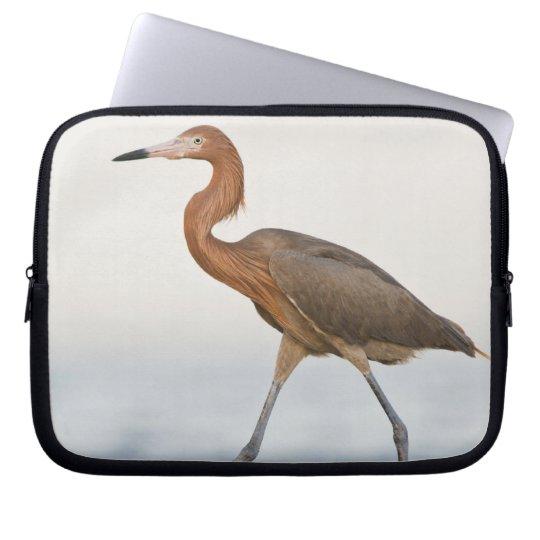 Reddish Egret adult hunting in bay, Texas Laptop Sleeve