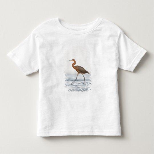 Reddish Egret adult hunting in bay, Texas Toddler T-shirt