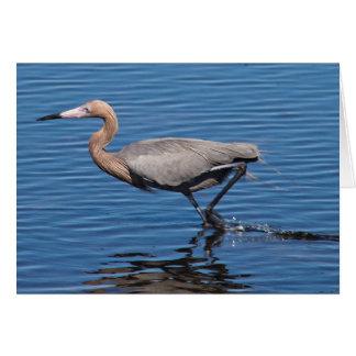 Reddish Egret Card
