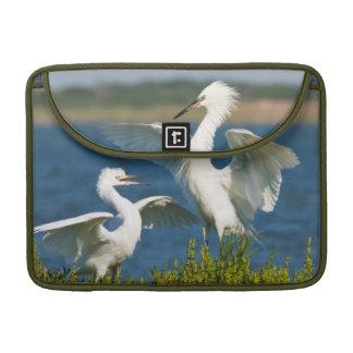 Reddish Egret (Egretta Rufescens) Adult Feeding Sleeves For MacBook Pro