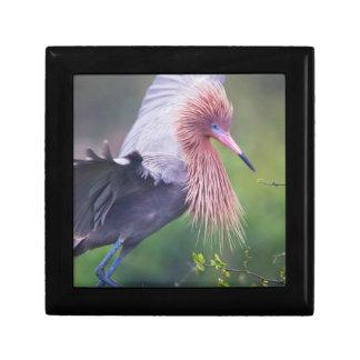 Reddish Egret (Egretta Rufescens) Adult Gift Boxes