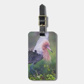 Reddish Egret (Egretta Rufescens) Adult Luggage Tag