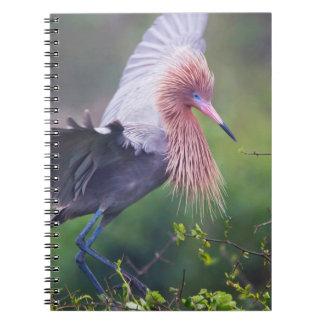 Reddish Egret (Egretta Rufescens) Adult Spiral Notebooks