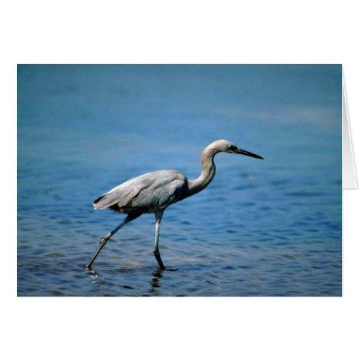 Reddish Egret, fishing Greeting Card
