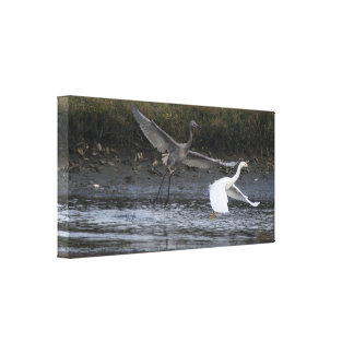 Reddish Egret I Wrapped Canvas Gallery Wrapped Canvas