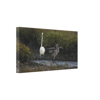 Reddish Egret III Wrapped Canvas Stretched Canvas Print