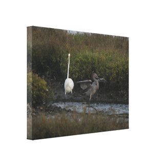 Reddish Egret IV Wrapped Canvas Canvas Print