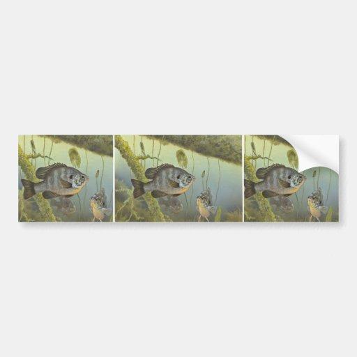 Redear Sunfish Car Bumper Sticker