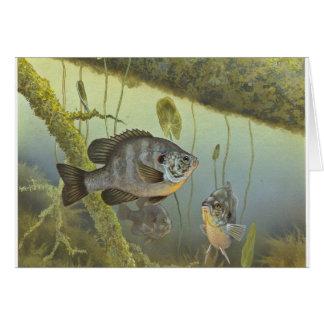 Redear Sunfish Card
