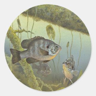 Redear Sunfish Classic Round Sticker