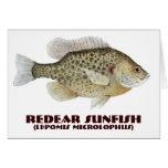 Redear Sunfish Greeting Card