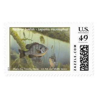 Redear Sunfish - Lepomis microlophus Stamp