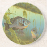 Redear Sunfish Lepomis Microlophus Timothy Knepp Drink Coasters