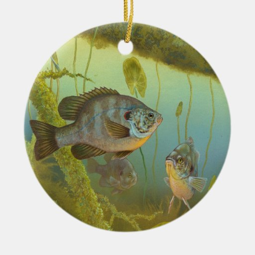 Redear Sunfish Lepomis Microlophus Timothy Knepp Christmas Tree Ornament