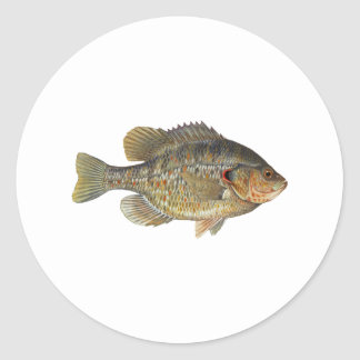 Redear Sunfish - Shellcracker Classic Round Sticker