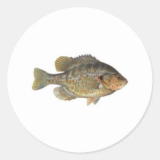 Redear Sunfish - Shellcracker Sticker