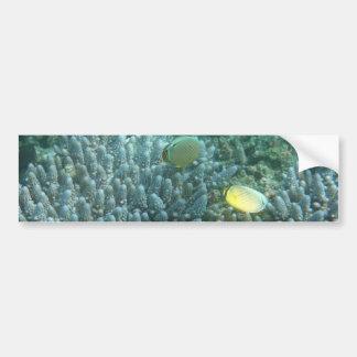 Redfin Butterflyfish (Chaetodon lunulatus) Bumper Sticker